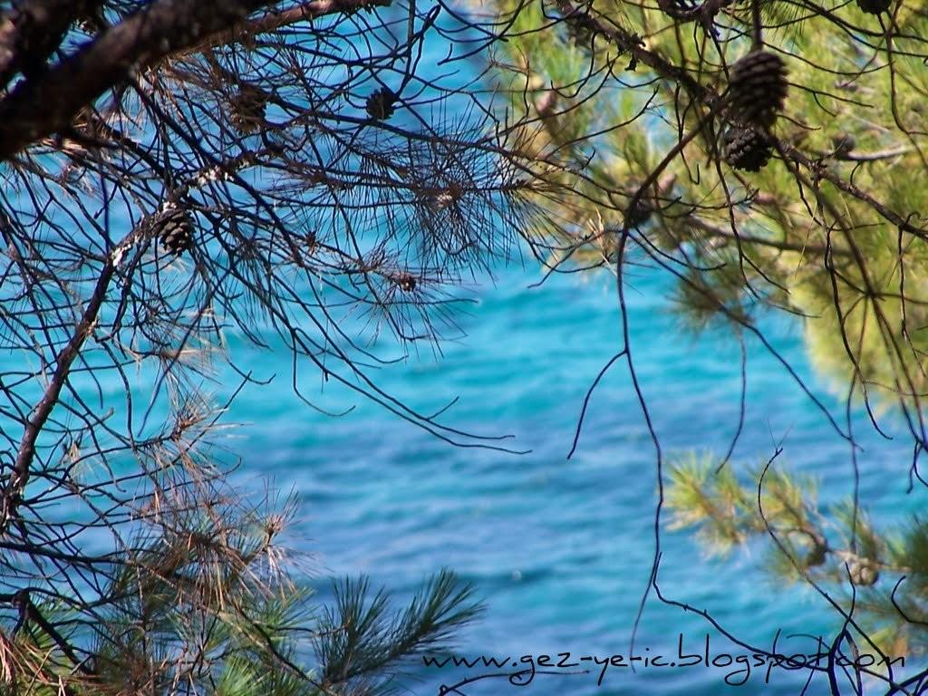 Deniz ve Çam